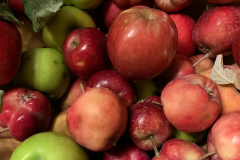 Apfelernte_IMG_6689